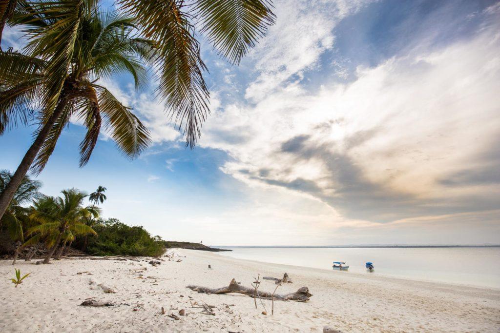 Insel Iguana Pedasi Panama Reise