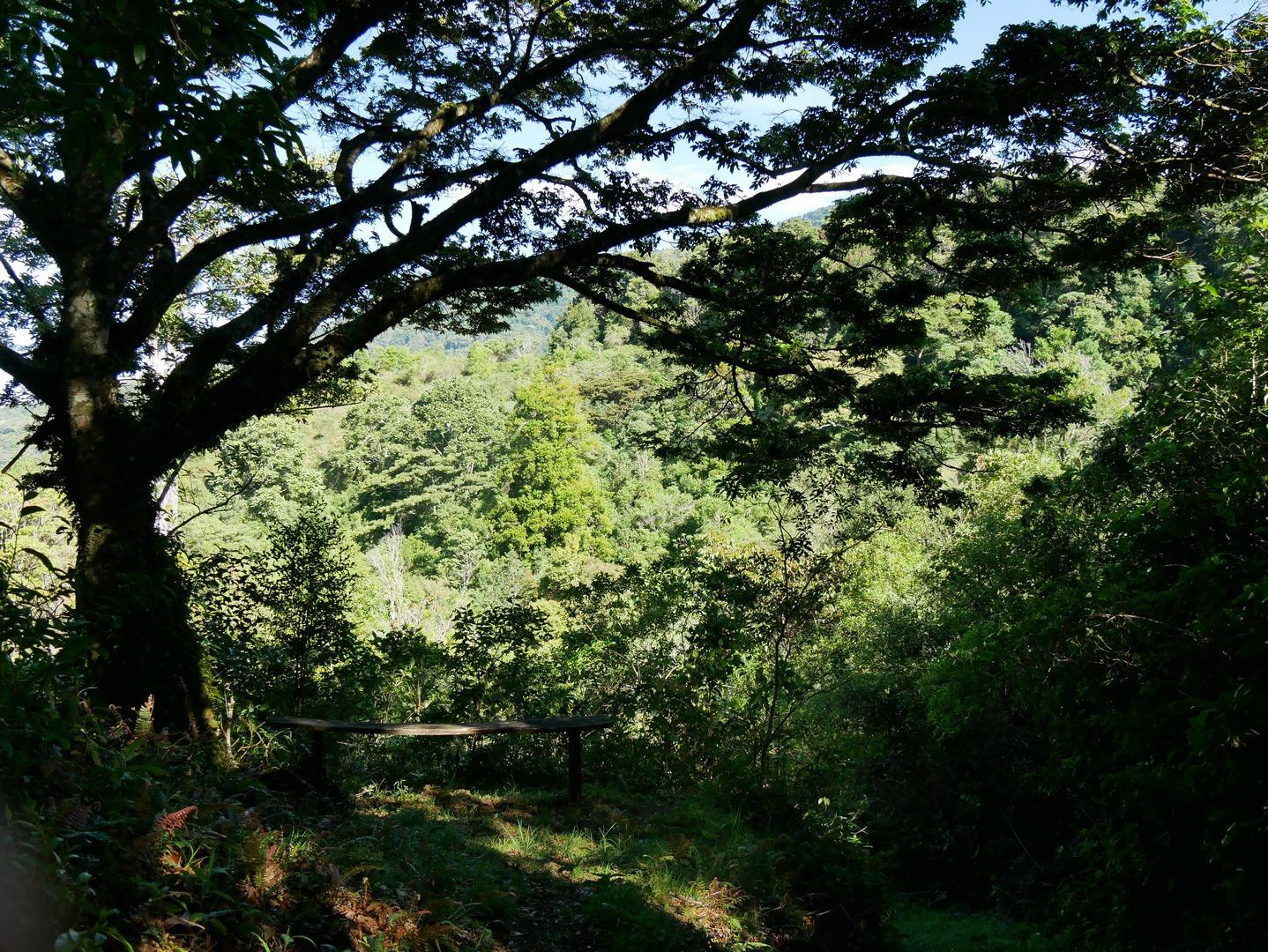 Bäume Mount Totumas Lodge_Panama Reise