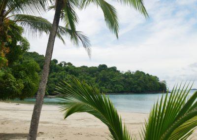 Palmen Isla Coiba Panama