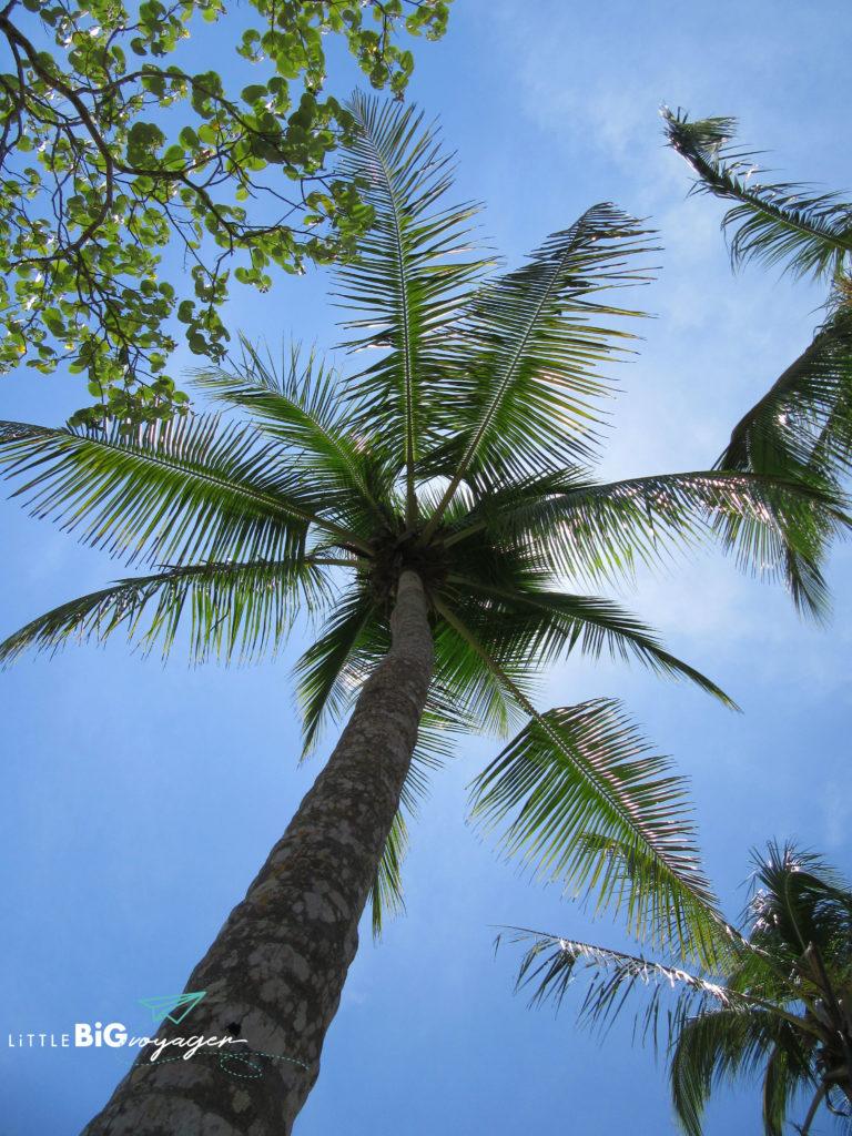 Palme_Panama_Reise