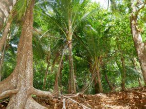 Palmen im Nationalpark Chiriqui_Panama Reise