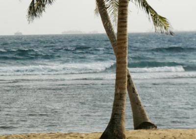 Palme_San Blas_Panama_Reise