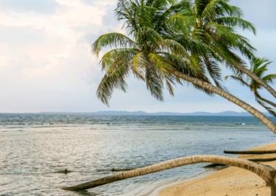 Panama San Blas Inseln Palmen