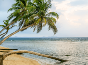 Palmen San Blas Insel