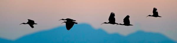 Vögel_Himmel_Brasilien_Reise