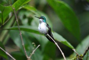 Kolibri_Ecuadorreise