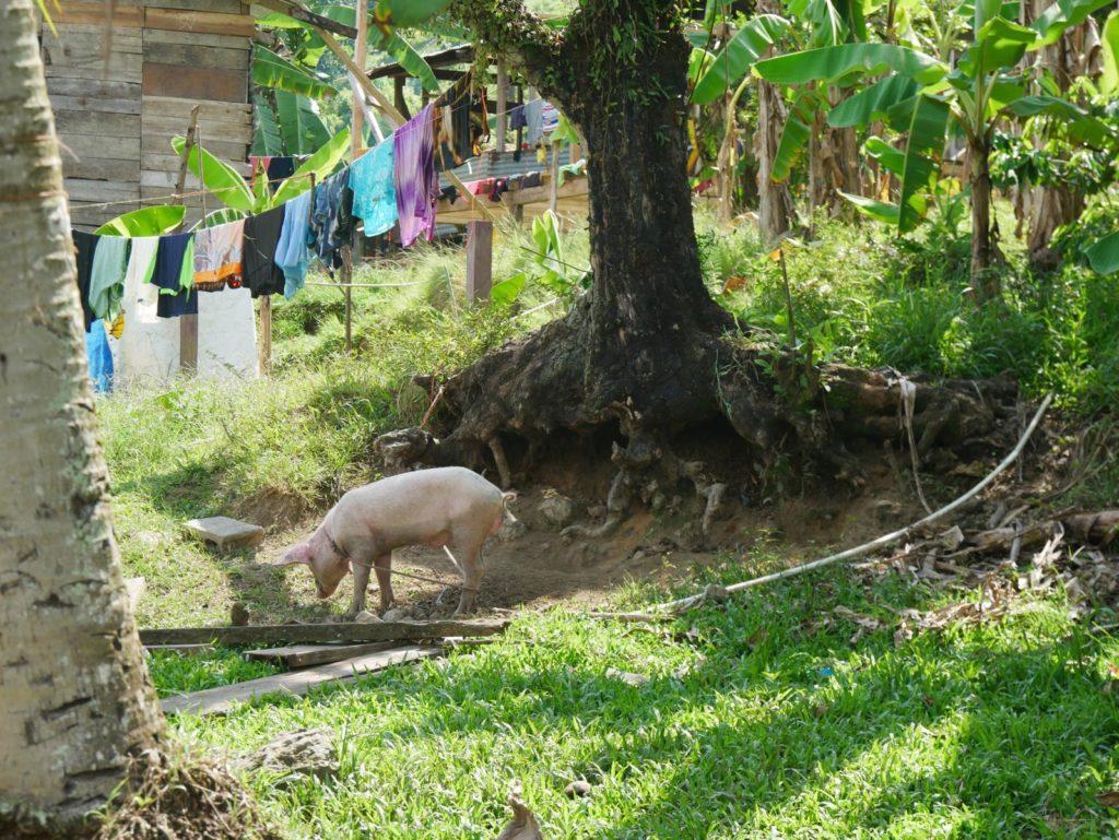 Einblick Dorflebene_Ngobe_Bugle_Panama Reisebericht
