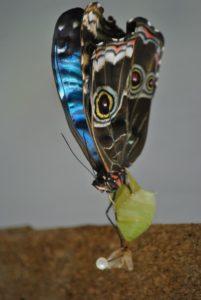 Schmetterling_Mindo_Ecuadorreise_mit Kindern