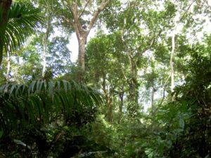 Nationalpark Soberania_Panama Reise