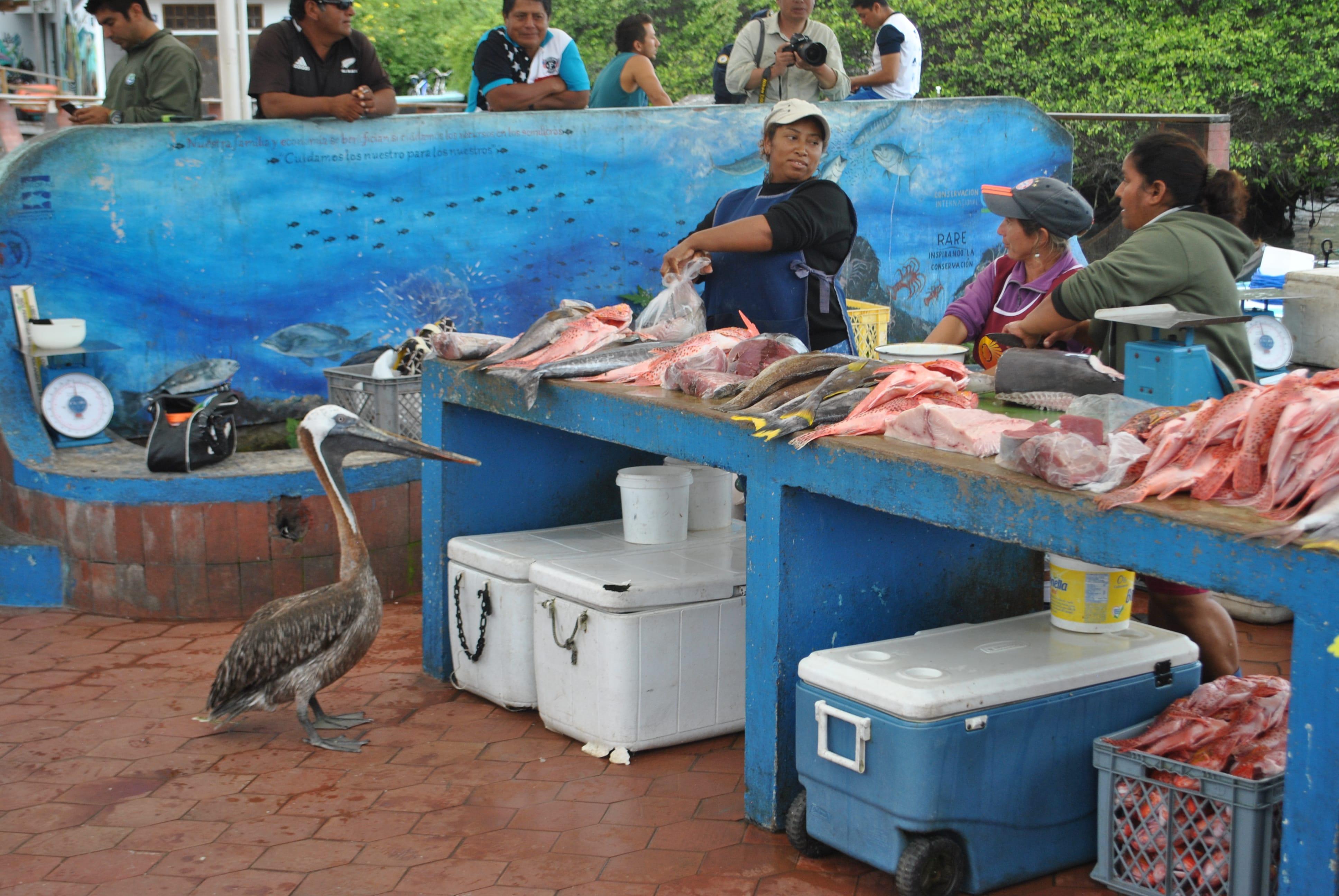 Galapagos Rundreise Ayora Fischmarkt
