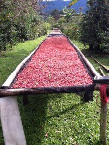 Kaffee Tour Panama Hochzeitsreise