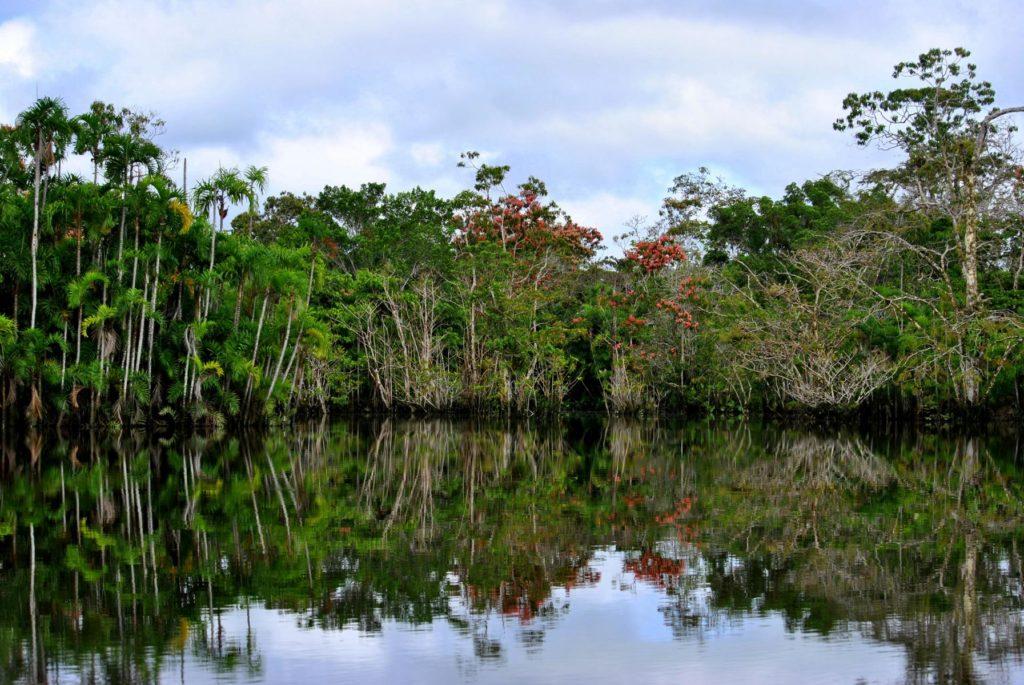 Regenwald Ecuador Hochzeitsreise