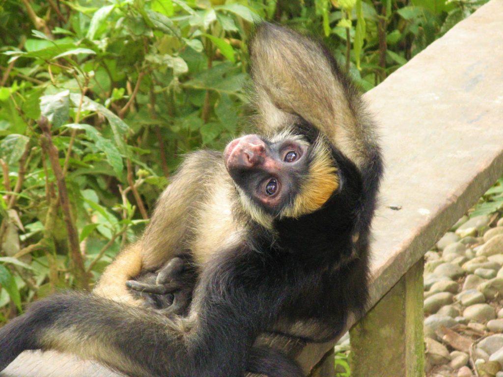 Tierauffangstation Dschungel Ecuador Reise