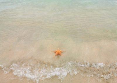 Seestern Starfish Beach Bocas del Toro