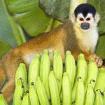 Affen Manuel Antonio Gruppenreise Costa Rica