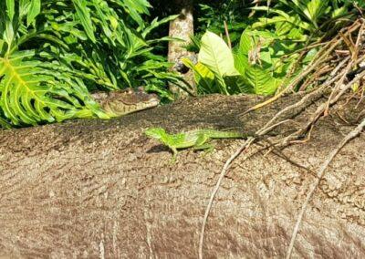 Wanderung Costa Rica Familienreise